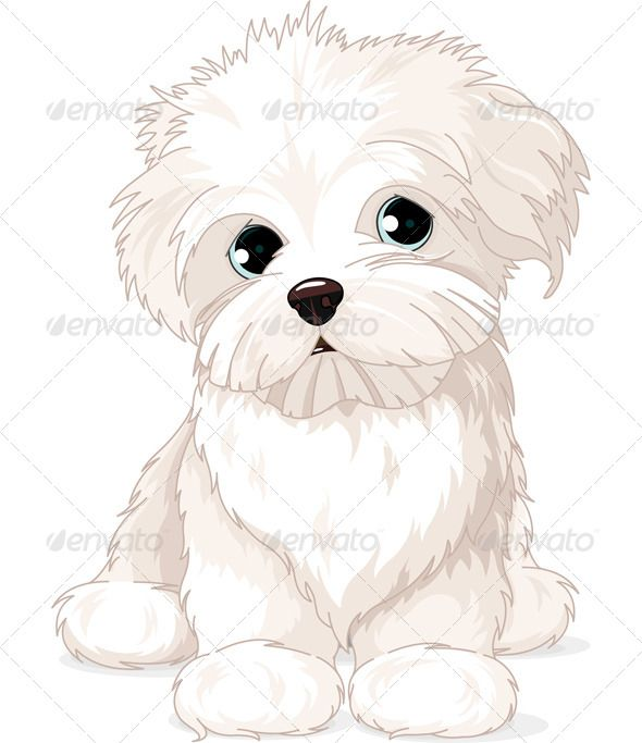 Maltese Puppy Dog Puppy Drawing
