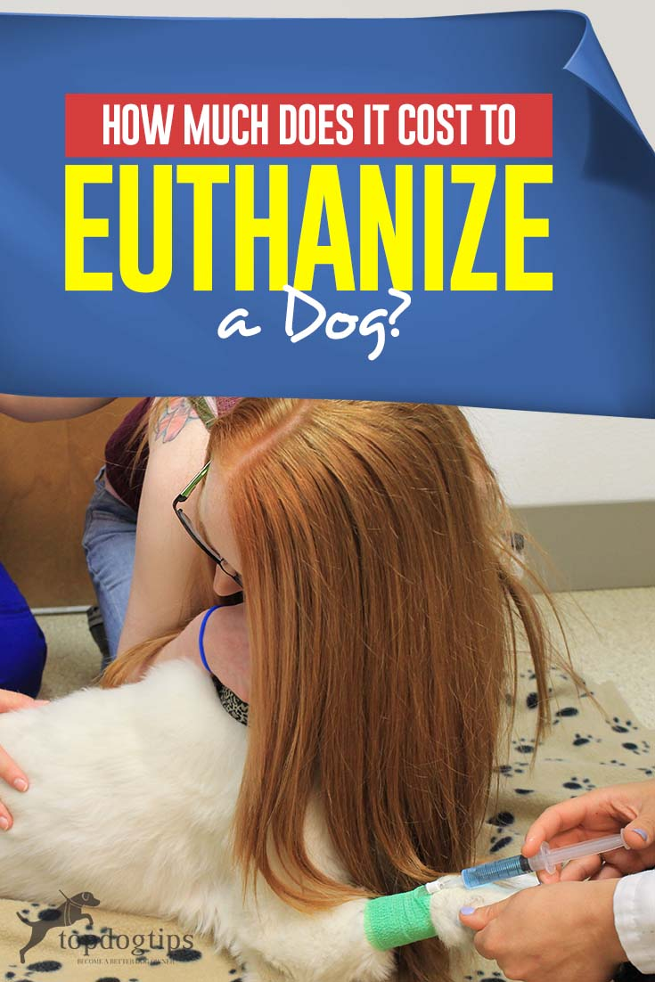 How Much Does It Cost to Euthanize a Dog? Dog cremation