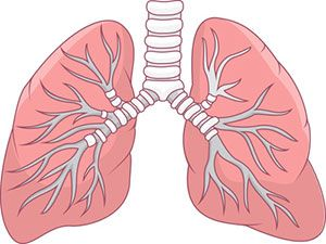 Build a lung model household items science fair and school build your own model of lungs using household items this quick and easy science project shows how lungs work to help us breathe ccuart Image collections
