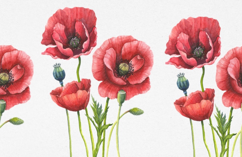 DNVEN 20 inches x 16 inches Removable Beautiful Poppies Flower Wall Decals Stickers Home Rooms Bedroom Living Room Kids Room Nursery Peel and Stick Wall Decor Wall Mural Wallpapers