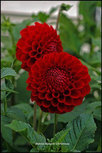 Nomi Di Fiori Rossi.19 Easy Herb Gardening Designs To Try Rossbloominggardens Com