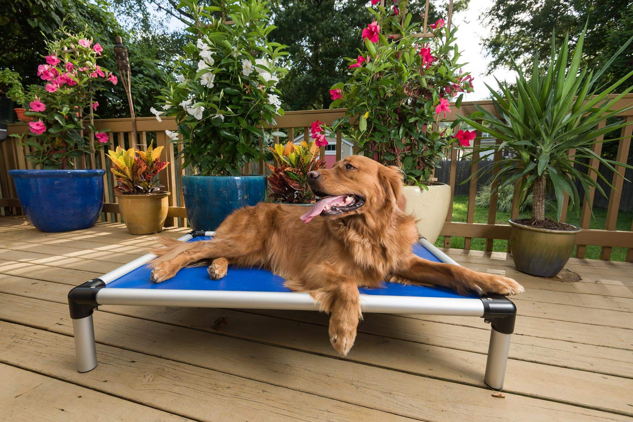The Reasons Why You Should Invest in an Elevated Dog Bed