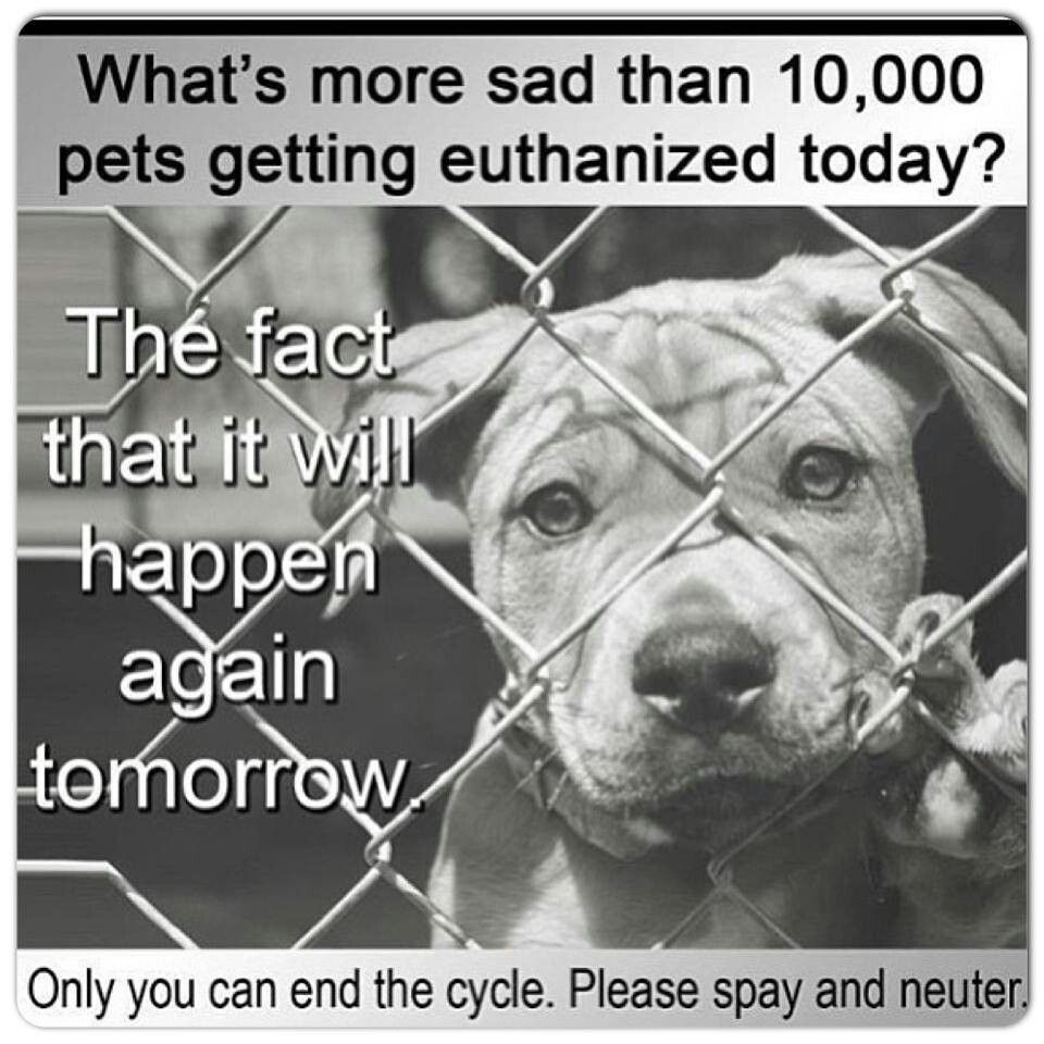Spay and neuter! Don't breed! Shelter dogs, Animal