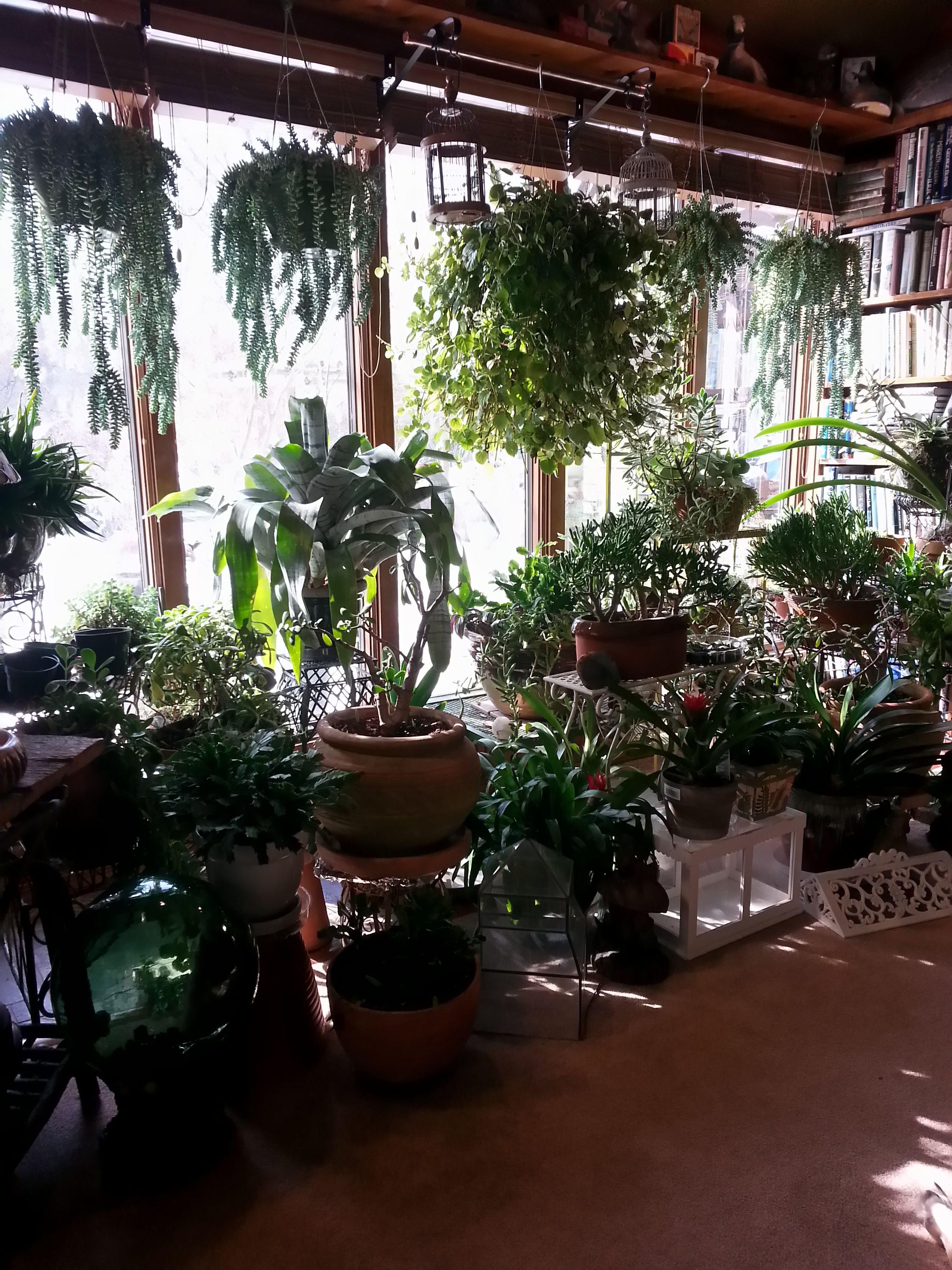 my indoor winter garden 2014 my ever changing garden 2011 2013