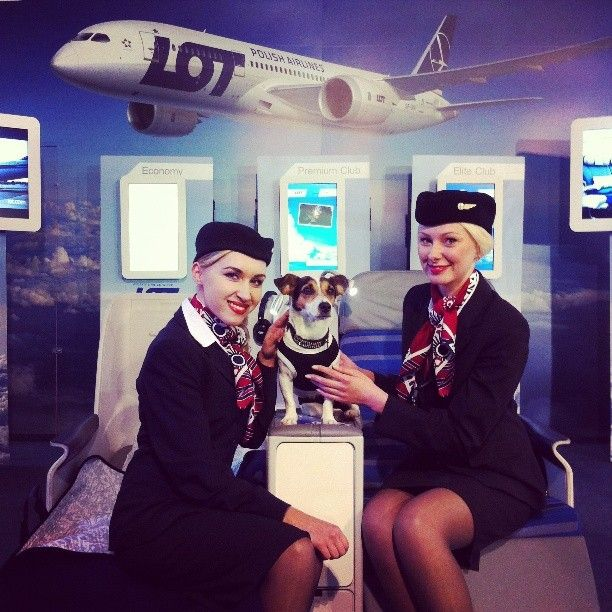 Company Mascot By Lot Polish Airlines Flylot Instagram