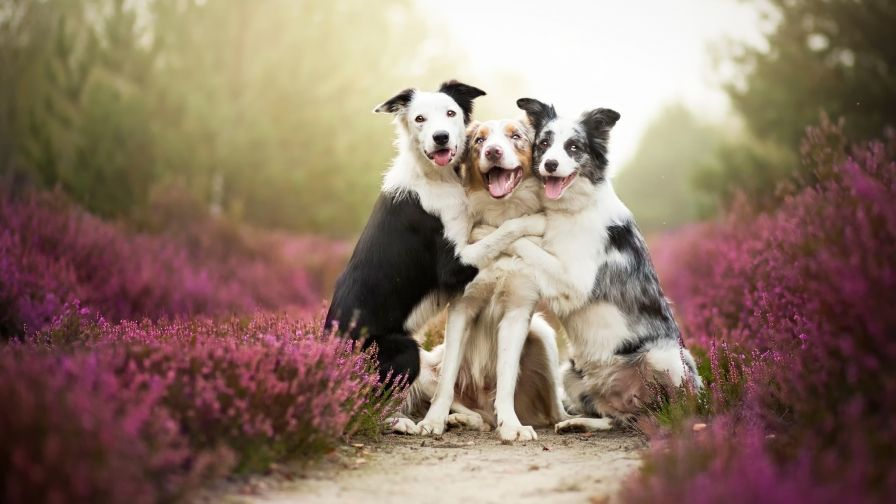 Wonderful Scenery Background Free Download Wallpapers Pets Animals Cute Animals