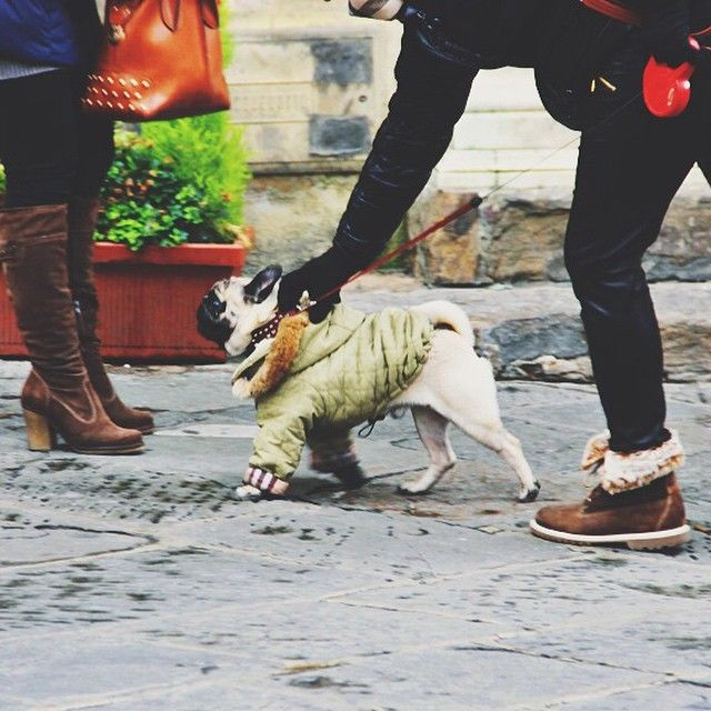 And the award for best dressed goes to…#florence #fashion #firenze #moda #centro #pup #puppy #pug #winter #italy #italia #fashionfoward #staywarm #travel #seeitaly #bestof #threads #bestdressed #whoworeitbest (at Historic Centre of Florence)