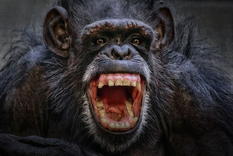 Absolutely Amazing Animals Closeup Photography by Johnny ...