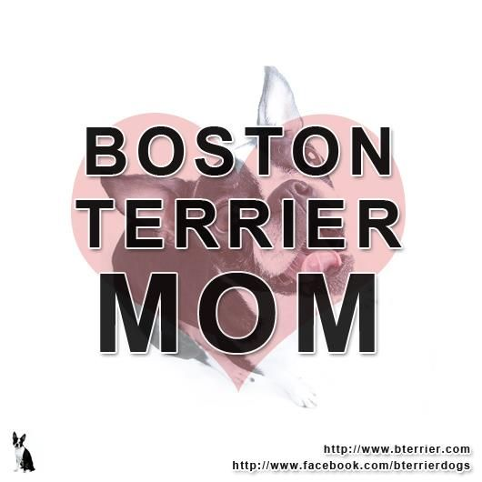 Boston Terrier Mom....and proud of it! <3