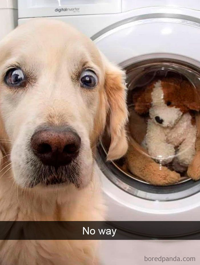 40 Funny And Cute Dog Snapchats That Will Hopefully Make Your Day (New Pics)