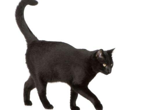 Why do cats wag their tails?  Perché i gatti scodinzolano? Cosa vogliono comunicare?
