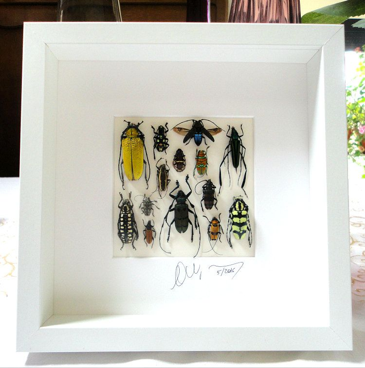 Artframe with real insects : Topquality display with mosaic of real mounted…
