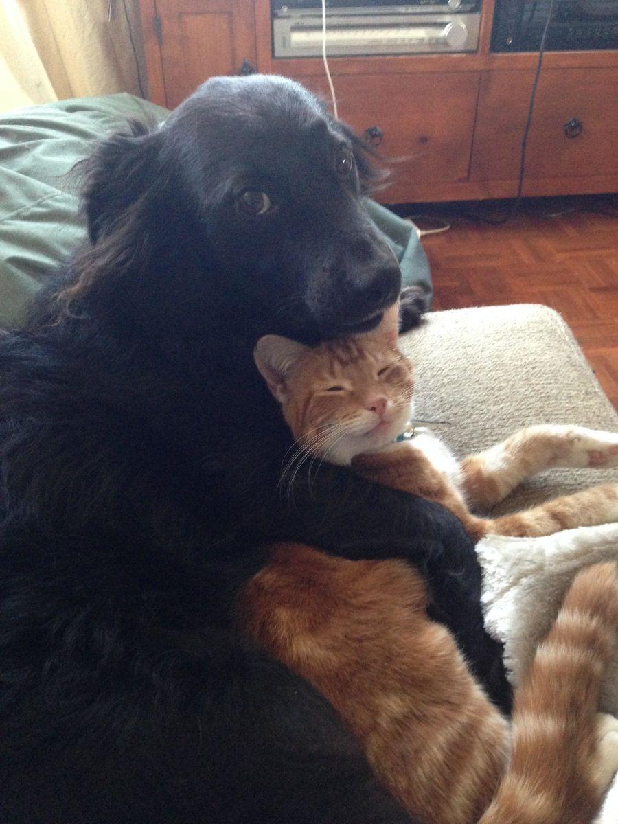 Photo of Este adorable perro y sus gatitos adoptados muestran que las familias vienen en todas las formas y especies