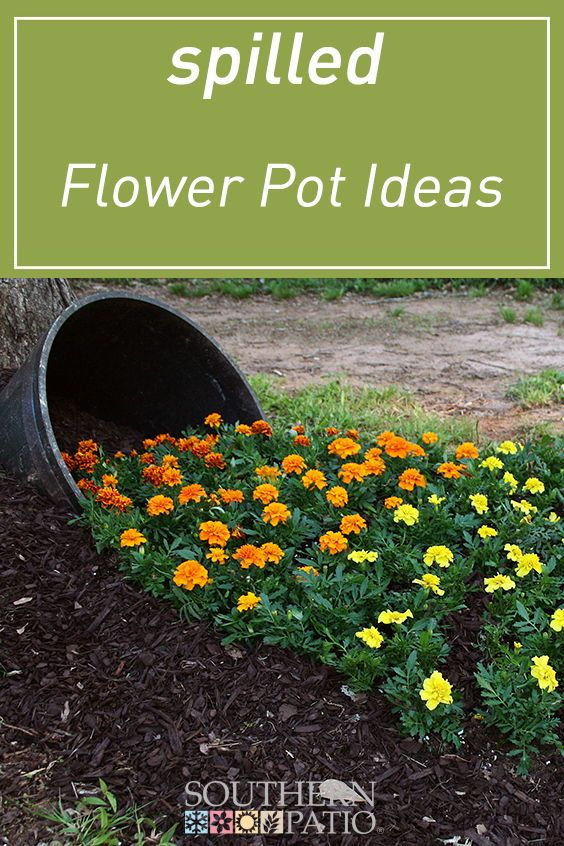 How to Create a Spilled Flower Garden Whiskey Barrel is part of Garden - The popular  flowers spilling out of barrel  effect has grown popularity in the past few years in the container gardening world  Learn how Southern Patio has recreated this project using a rustic garden planter