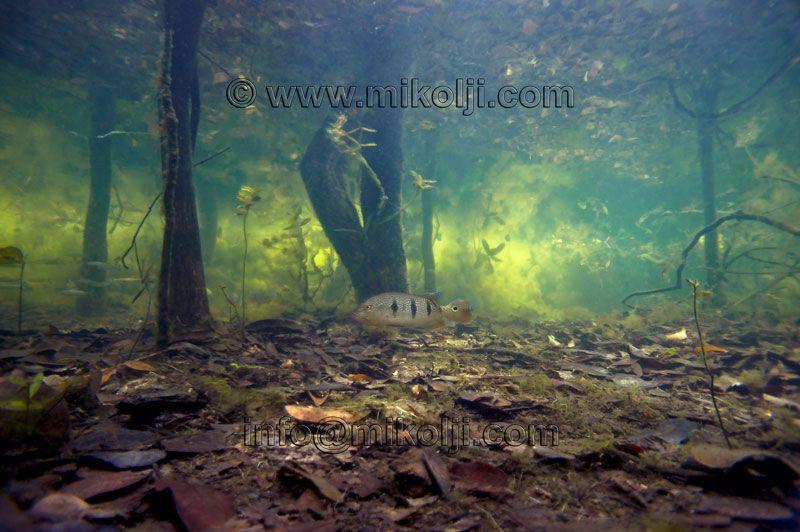 Amazon Underwater