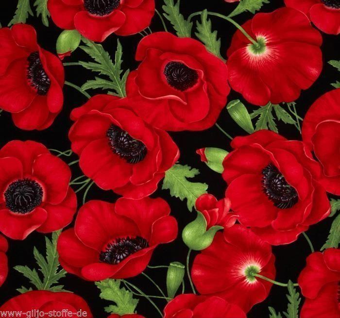 Timeless Treasures Flora Red Patchwork Stoffe Meterware Mohn Blumen 50cmx110cm Mohn Rot Stoffe Meterware