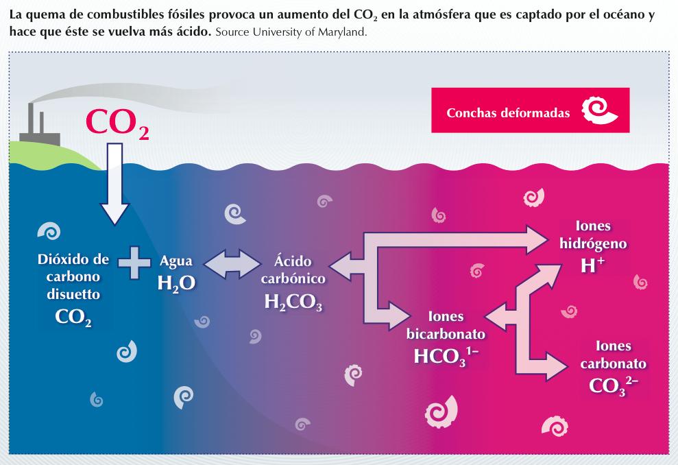 Acidificación Océano Png Acidificación Del Océano Medioambiente Agua Acida