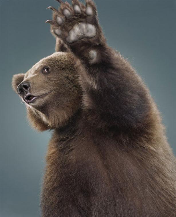 Смешной медвед картинка