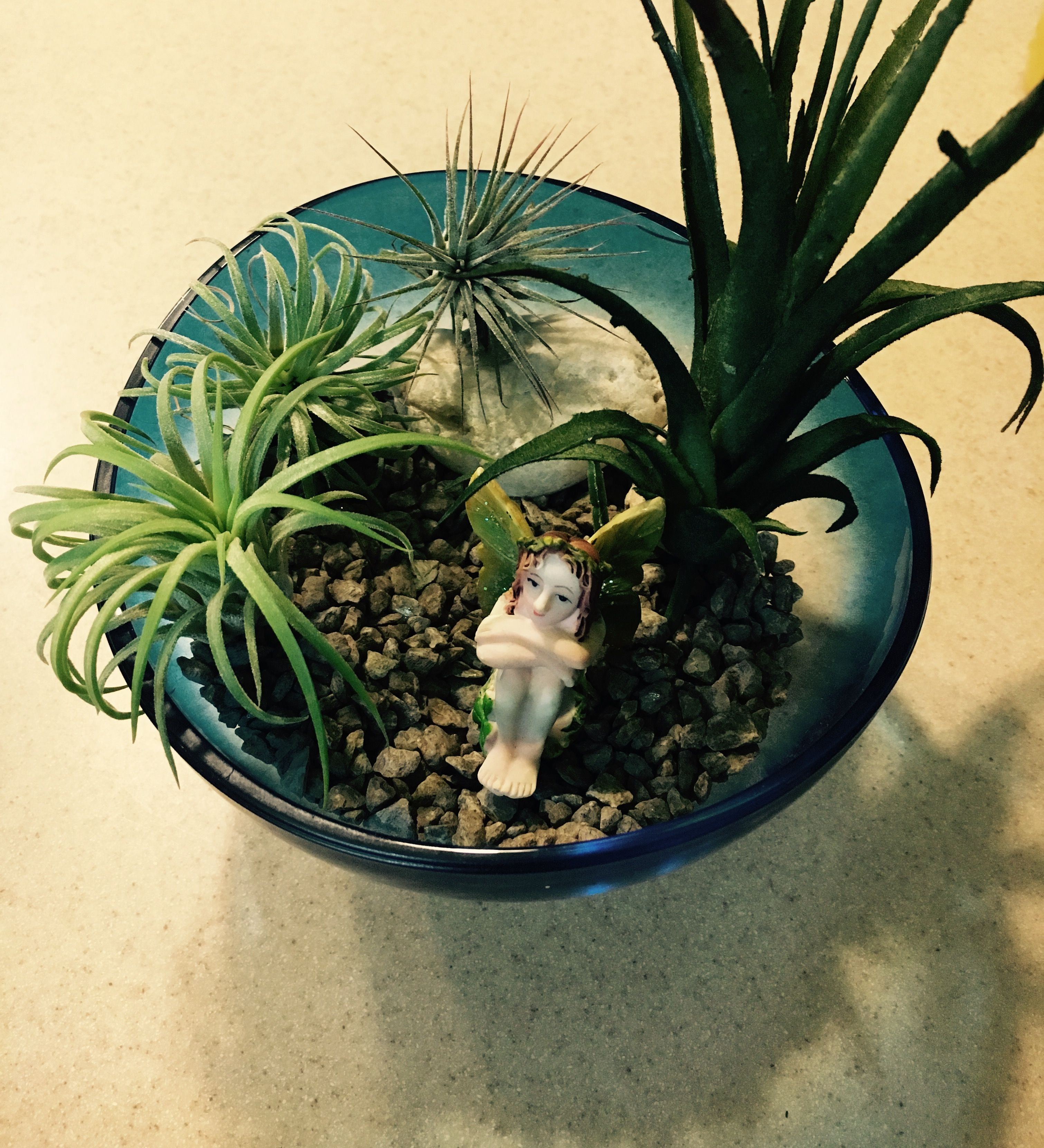 How to Grow and Care for Air Plants Plants, Air plants
