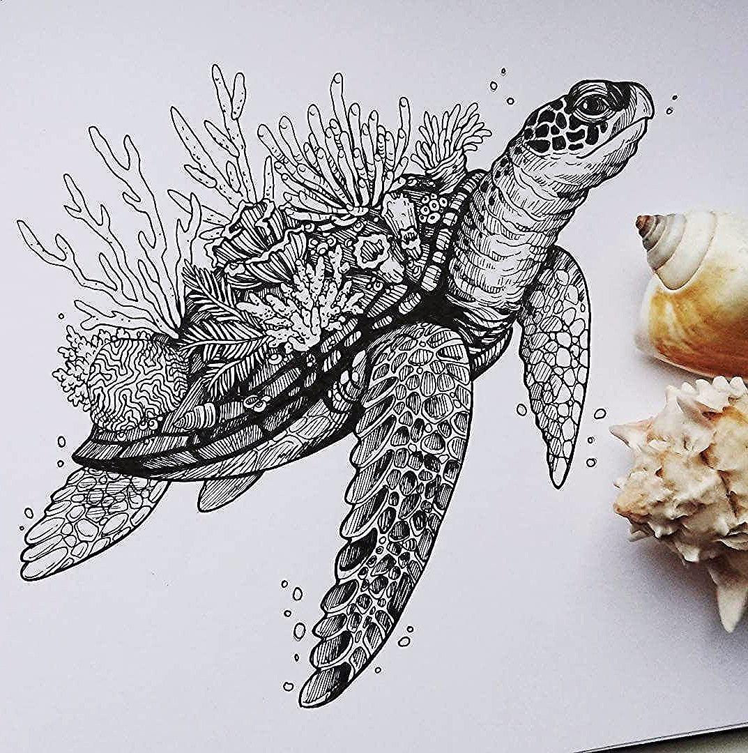 dessin de tortue animaux noir et blanc