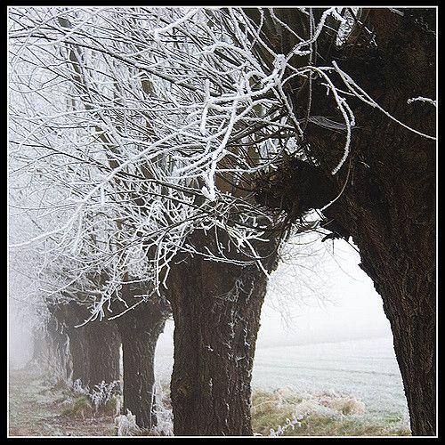 winterwonderholland07 | por qletsqop