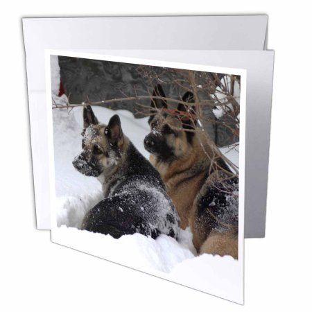 3drose german shepherds best friends greeting cards 6 x 6 inches 3drose german shepherds best friends greeting cards 6 x 6 inches set of m4hsunfo