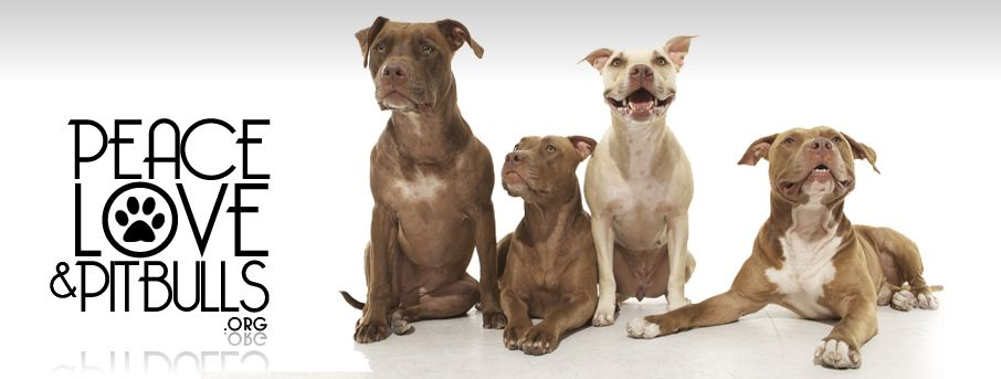 Pin By Izzy Pitman On Pit Bulls Xd Dog Love Pitbulls Cute Animals