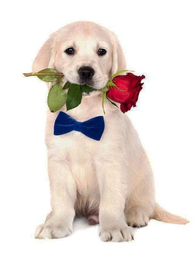 Male Dog Names Hundreds Of Creative Ideas For Your Boy Cute Dog Pictures Cute Animals Cute Dogs