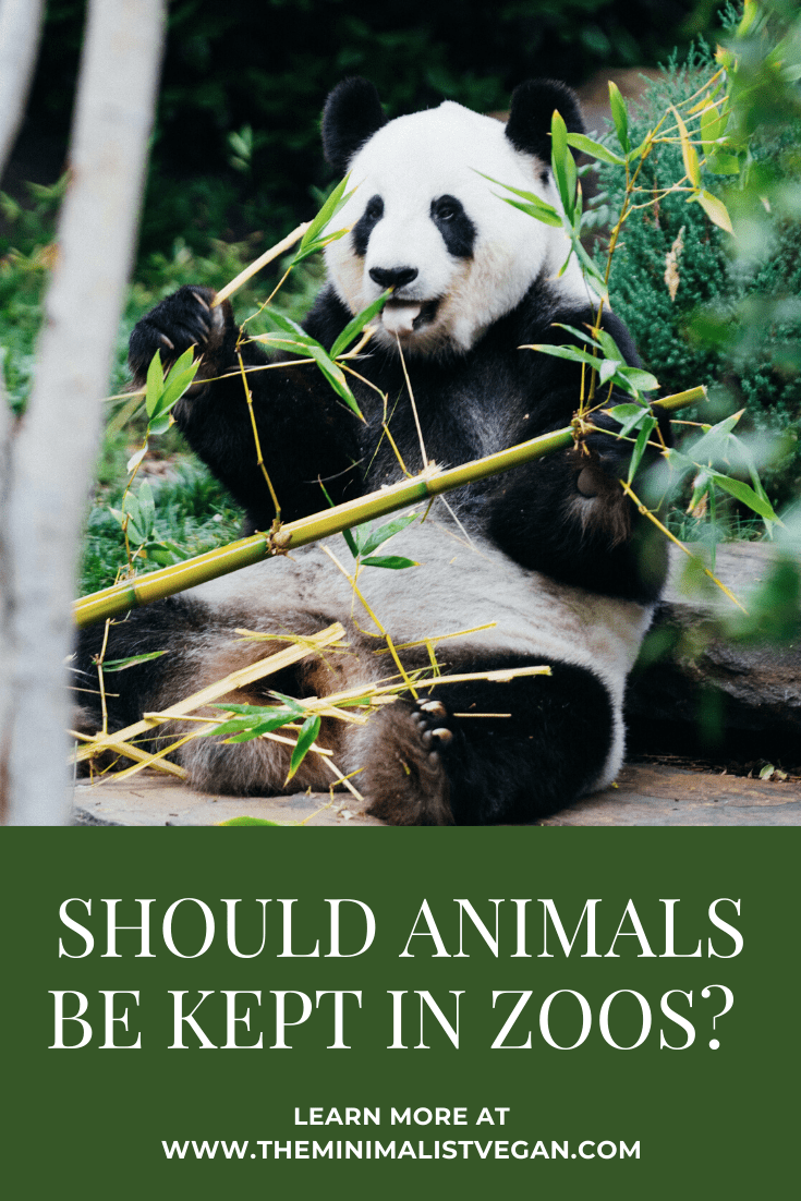 Should Animals Be Kept In Zoos The Minimalist Vegan Animals Animals Wild Endangered Animals