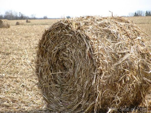 Corn stover is comparable in energy content to average hay on a corn stover is comparable in energy content to average hay on a dry matter basis sciox Choice Image
