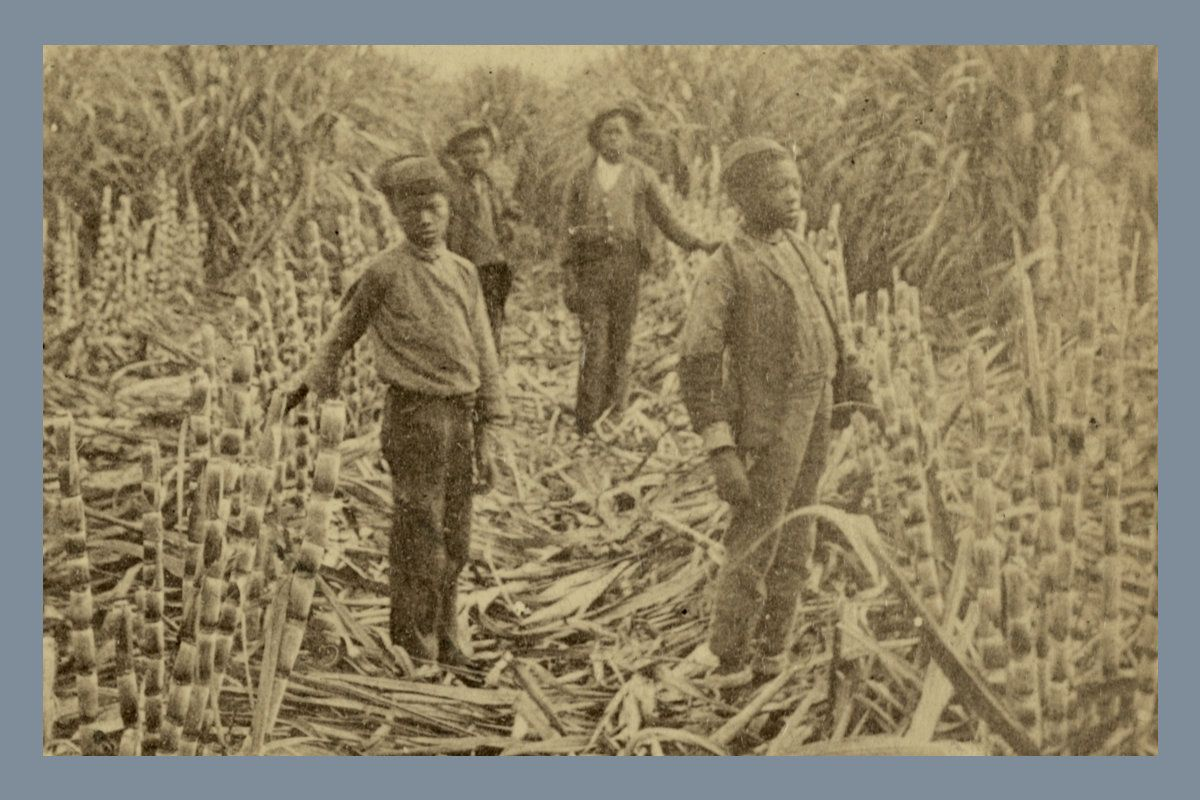 The Barbaric History of Sugar in America