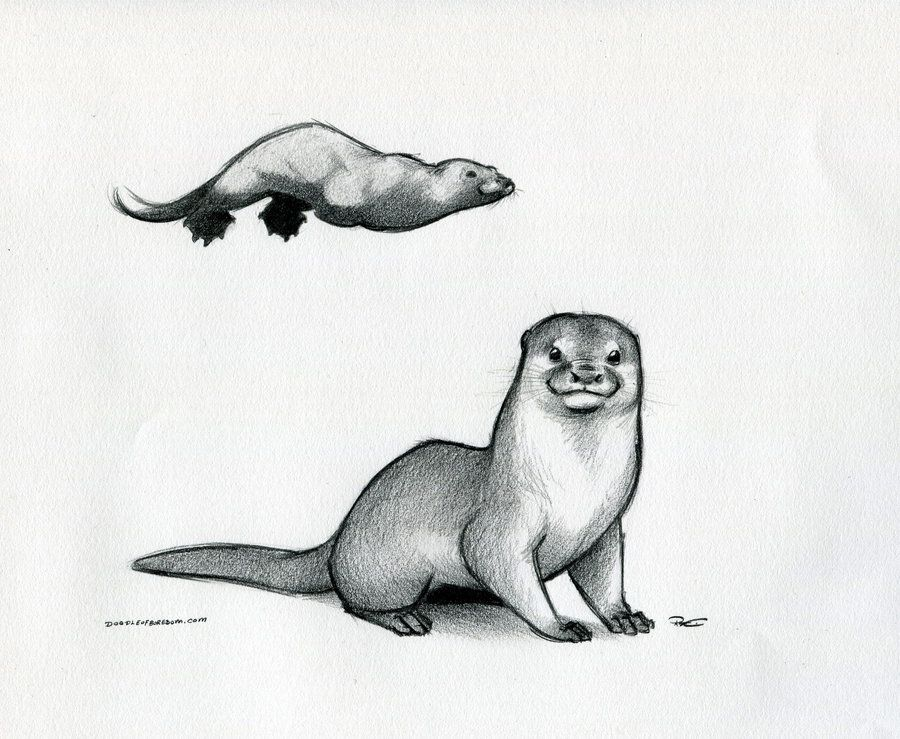 Otter by RobtheDoodler.deviantart.com on @DeviantArt | T A T T O O S ...