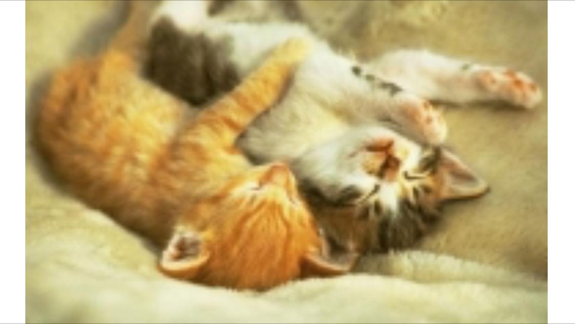Pin by Robert Daniel on My Kitty Kats Hug your cat day