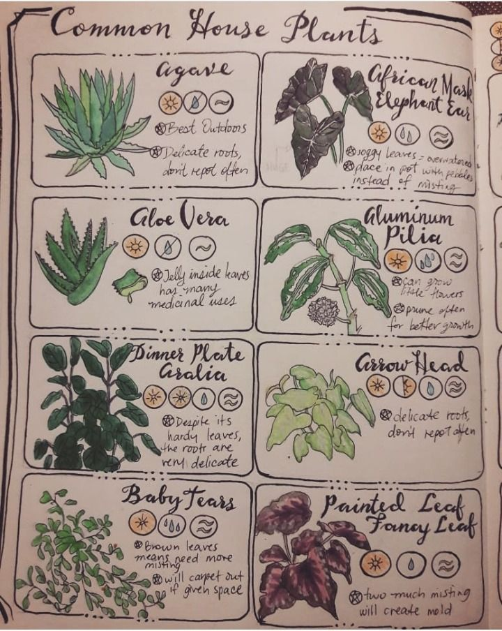 Throw Some Herbs On That Shit Herbwicc Pages One Two Of Common House Plants Book Of Shadows Common House Plants Spell Book