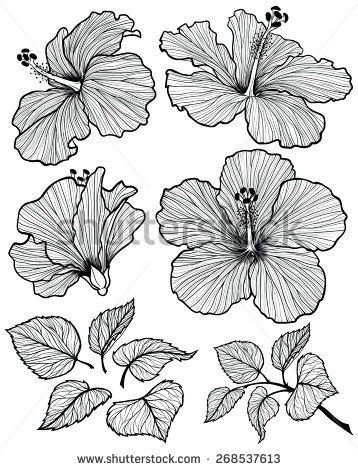 Image Result For Shoe Flower Drawing With Images Flower