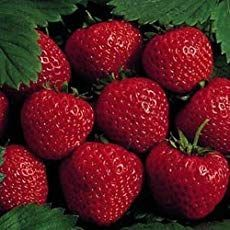 How To Grow Strawberry Plants: Strawberry Growing In A Nutshell #growingstrawberriesincontainers How To Grow Strawberry Plants: Strawberry Growing In A Nutshell #growingstrawberriesincontainers