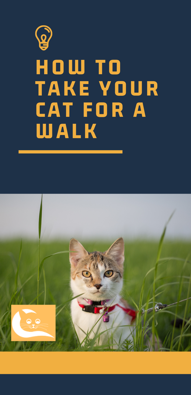 How To Take Your Cat For A Walk If You Think About It The Situation With Cats And Dogs As Pets Is Not Fair At All Dog Cat Care Cat Parenting