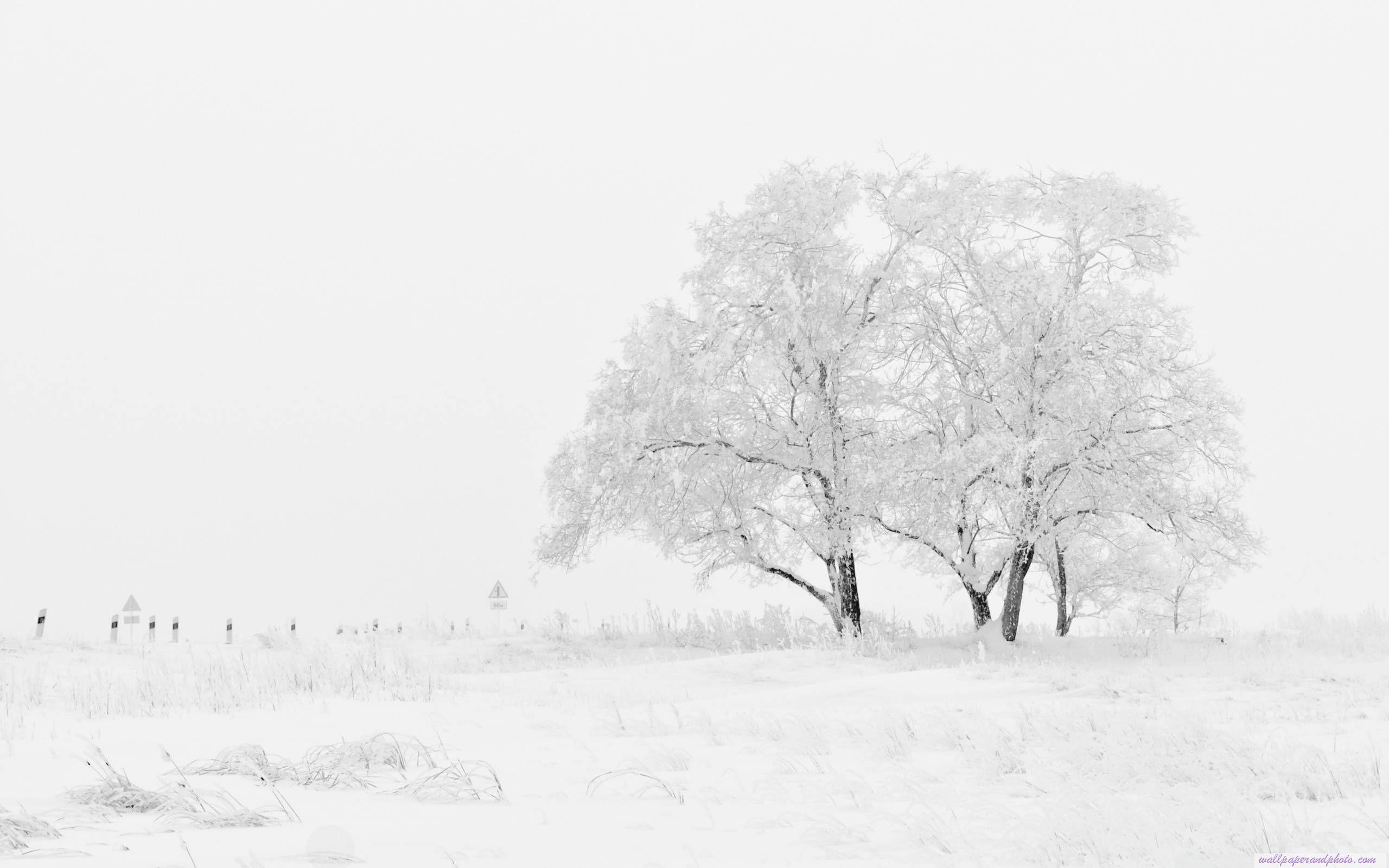 White Winter HD 16 9 16 10 desktop wallpaper Fullscreen Mobile