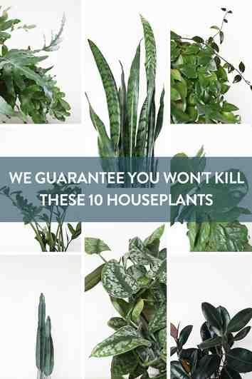 We Guarantee You Won't Kill These 10 Houseplants is part of Low light house plants, Houseplants low light, Easy house plants, Plants, Trendy plants, Inside plants - With some easy tips and tricks, here are 10 low light houseplants we guarantee you won't kill!
