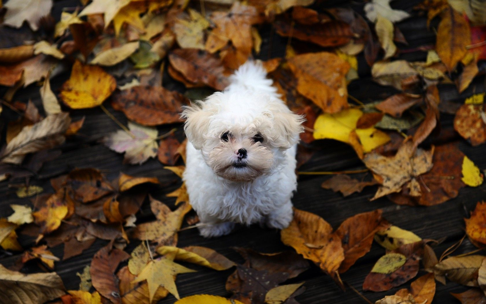Aww puppy looks lonely photos pinterest high quality