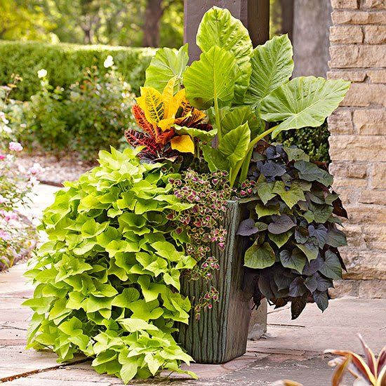 Tropical Flowers Transform Your Patio Into A Colorful Outdoor Living Room With Pots Of Flowering Tropical Plants If Y Plants Tropical Plants Patio Flower Pots