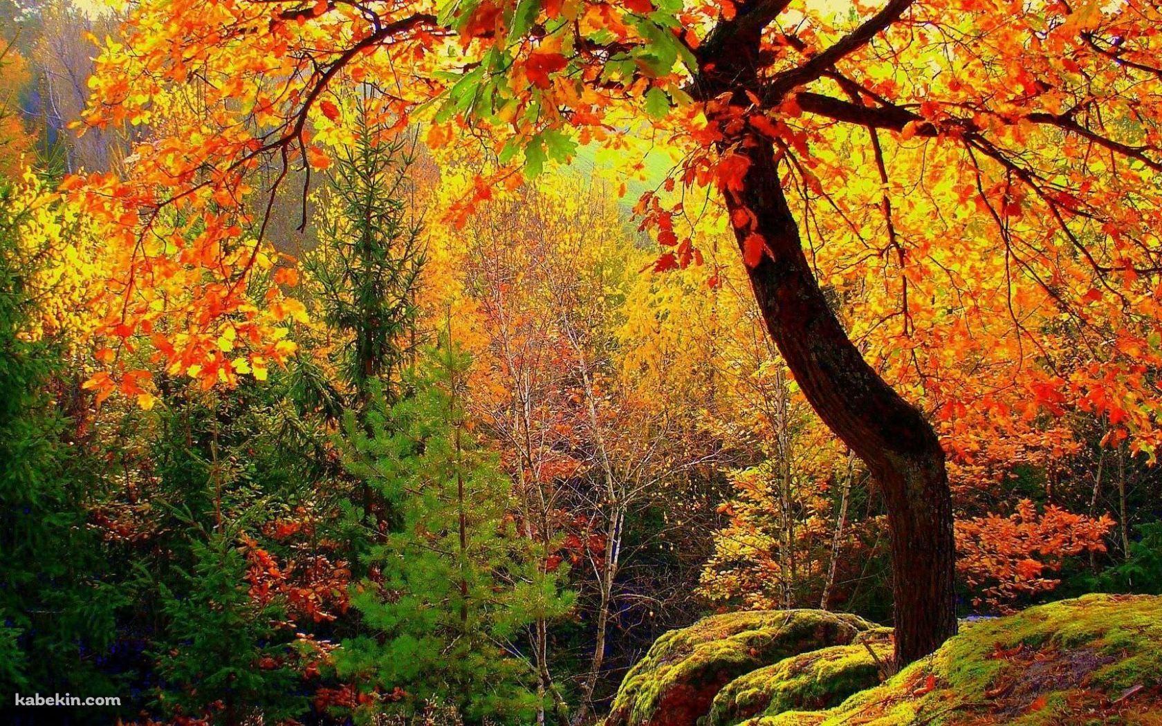 秋 黄金色の景色の壁紙 画像あり 壁紙 景色 Pc用壁紙