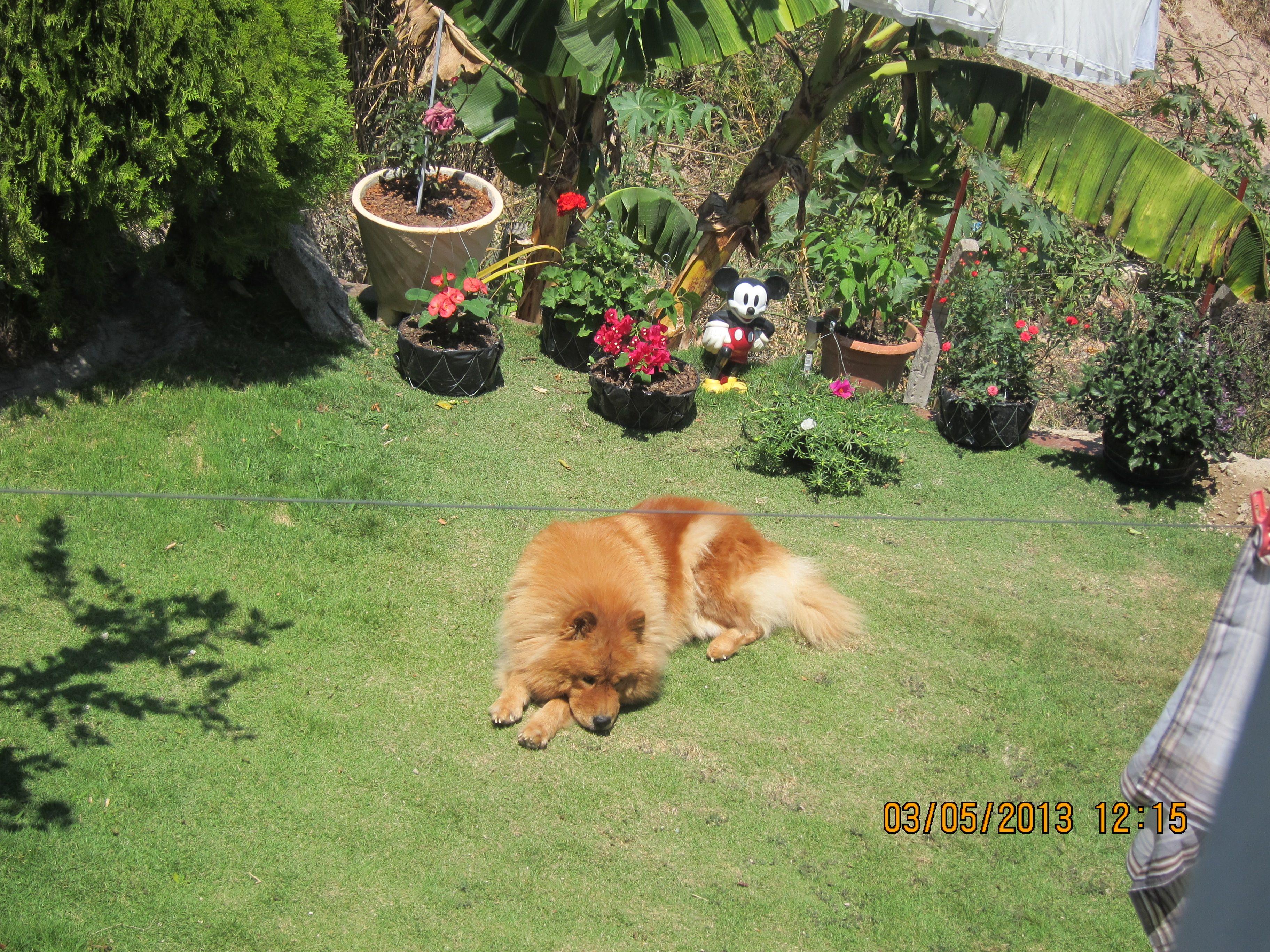 La Mascota en el patio