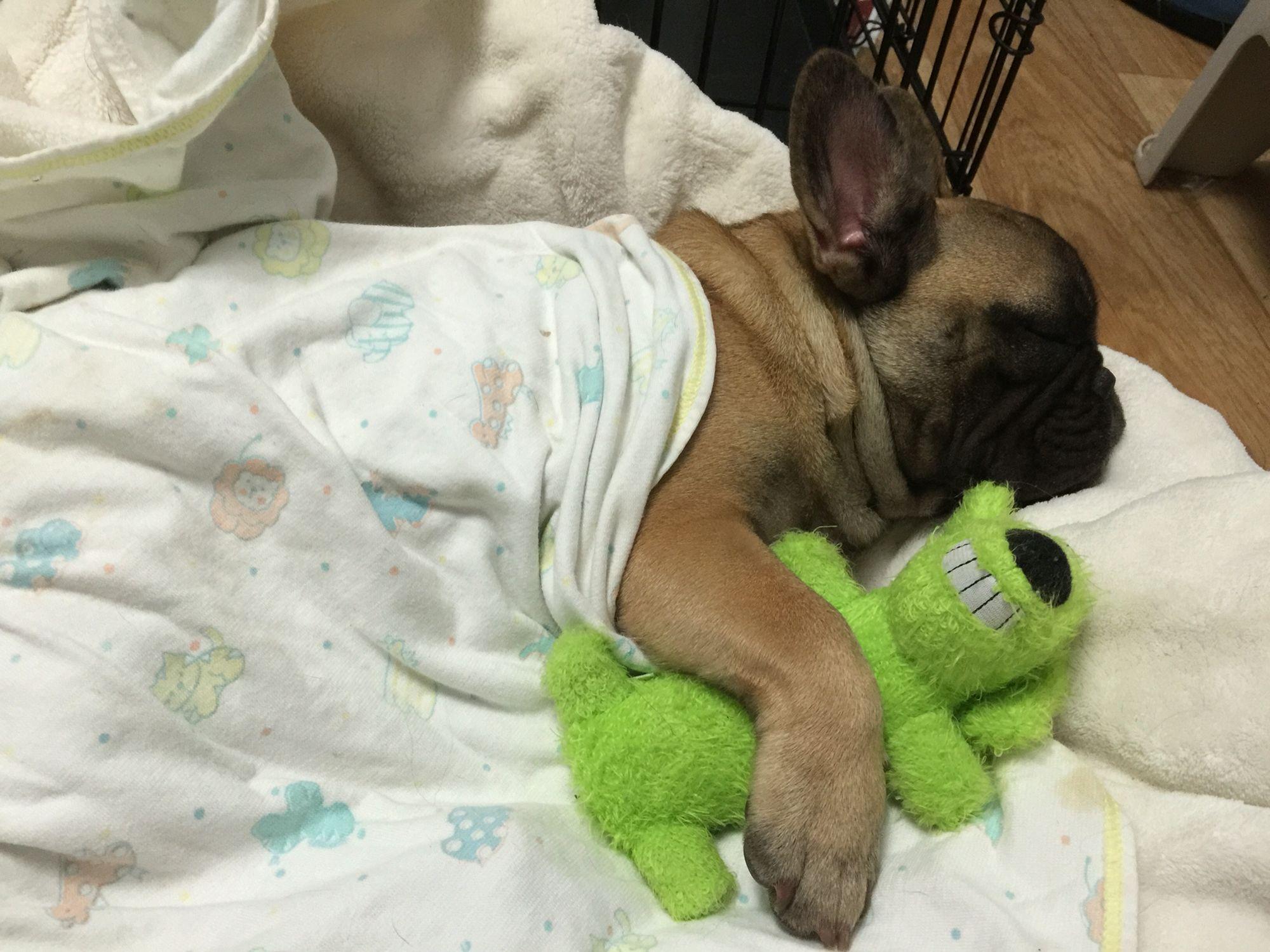 Good Night Dogs Animals Good Night