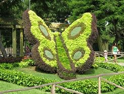 Espl ndida mariposa padlet pinterest topiary for Jardines espectaculares