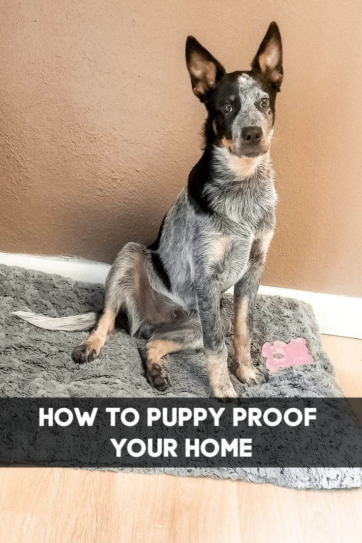 How to puppy proof your home puppies puppy find new puppy