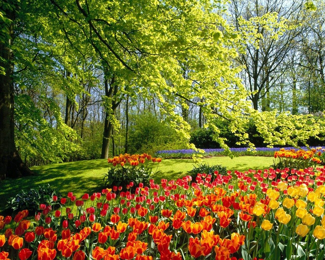 Image Detail For Spring Flower Wallpaper Spring Wallpaper Hd