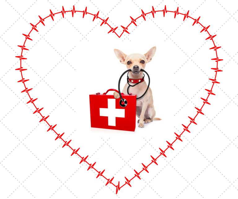 Magen Darm Probleme Beim Hund Das Kleine Erste Hilfe 1 1 Hunde Tierheilpraktiker Hundebesitzer