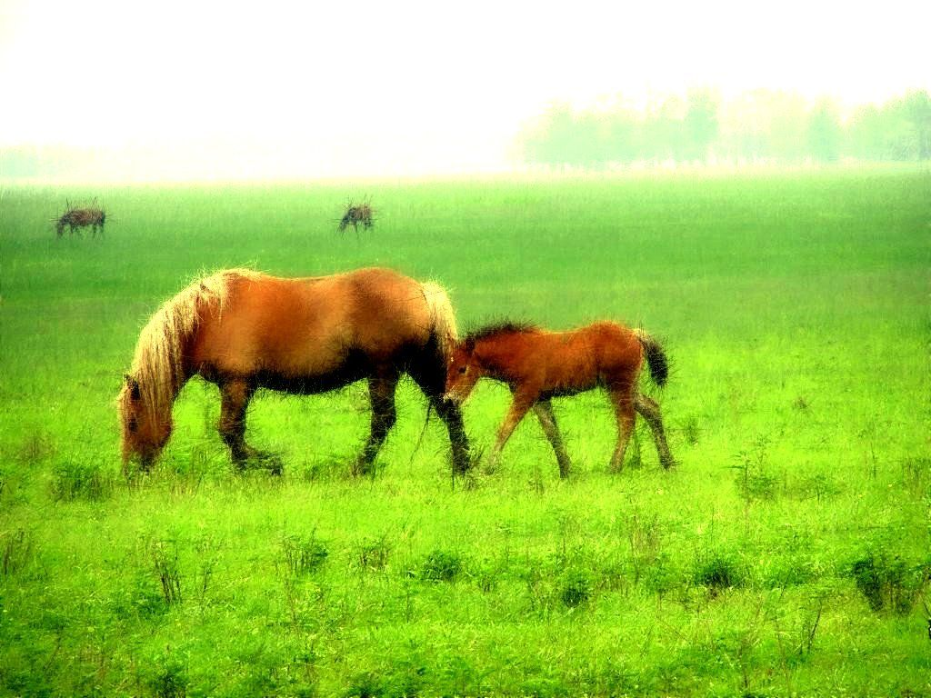 Must see Wallpaper Horse Landscape - 43d195319dda2f51acd864154b8d562a  You Should Have_366320.jpg
