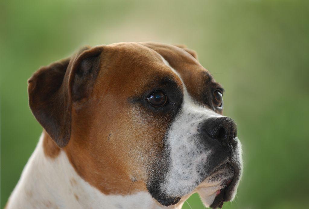 Sam the dog   Flickr - Photo Sharing!